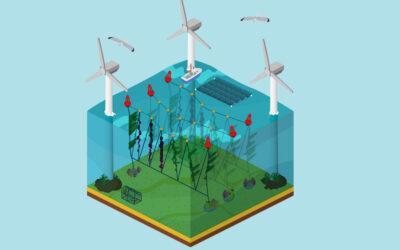 Groei Europese zeewiermarkt stimuleert teelt tussen windparken op Noordzee